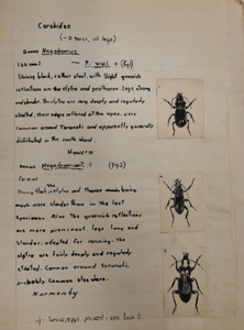 Aged 10, Anthony Harris had already produced his second hand-written and hand illustrated book on New Zealand beetles. Photo: Gregor Richardson Otago Daily Times 18 June 2018