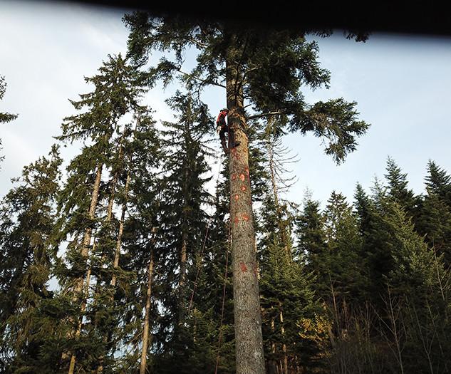 spezialholzerei 4.jpg