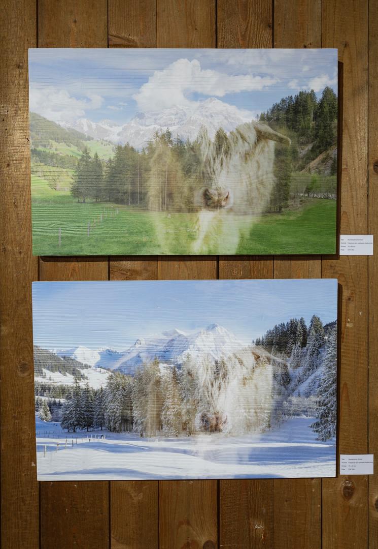 Hochlandrind - Winter/Sommer