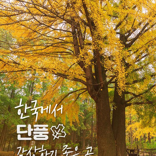 한국에서 단풍 감상하기 좋은 곳