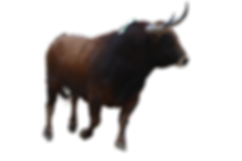 Stier-removebg-preview.png