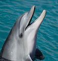 Dolphin-mar-marina-inteligentes