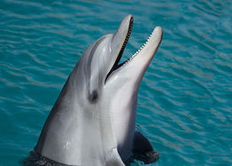 Dolphin Nature Tours Are Us!