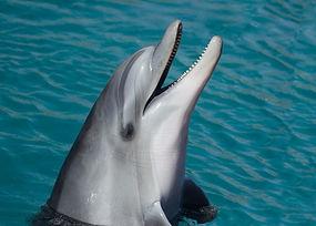 дельфин-море морской умный