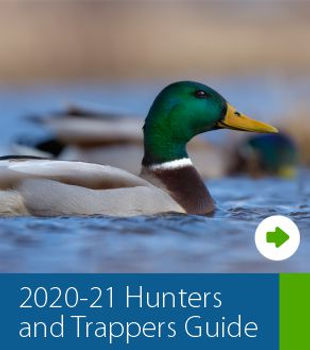 Hunting Guide RTF Graphic.jpg