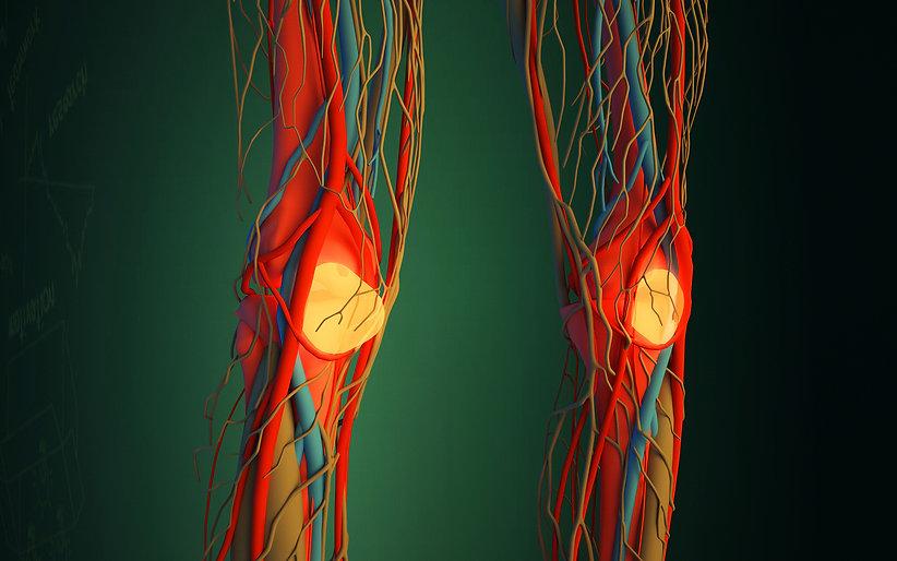 Blood_vessel.jpg