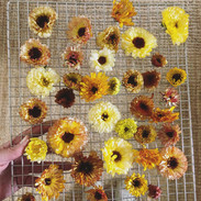 Dried Calendula.jpg