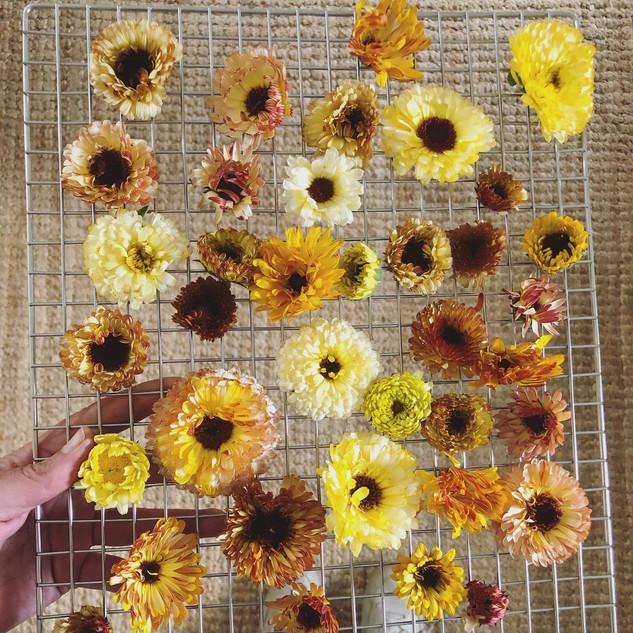Dried Calendula.jpg