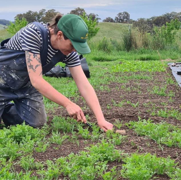 The Cottage Herbalist Weeding.jpg