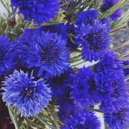 Pennyweight Farm Cornflowers.jpg