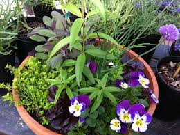 A planter of mixed flowers and herbs