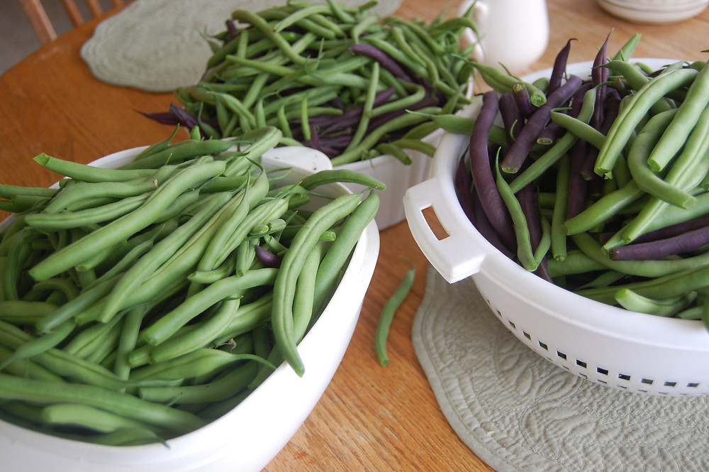 Bountiful bowls of beans