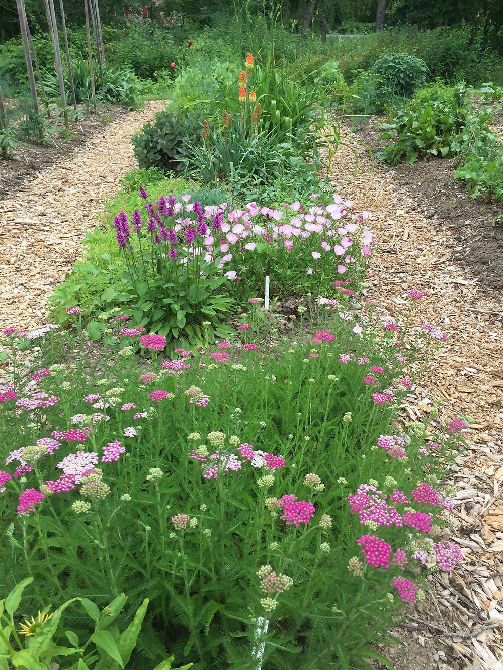 A full row in the garden