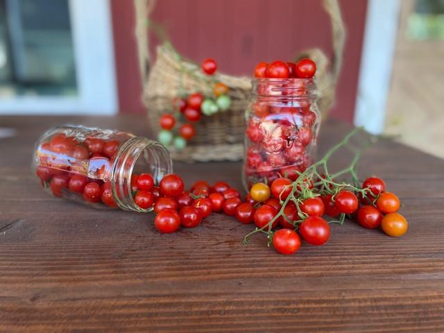 Glorious cherry tomatoes