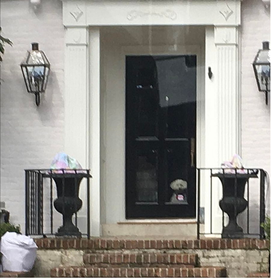 It's a Dog's Life: Neighbors and the media quickly spotted Snowflake, the abandoned Cruz family dog