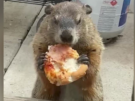 Every Day is Groundhog Day Around Here