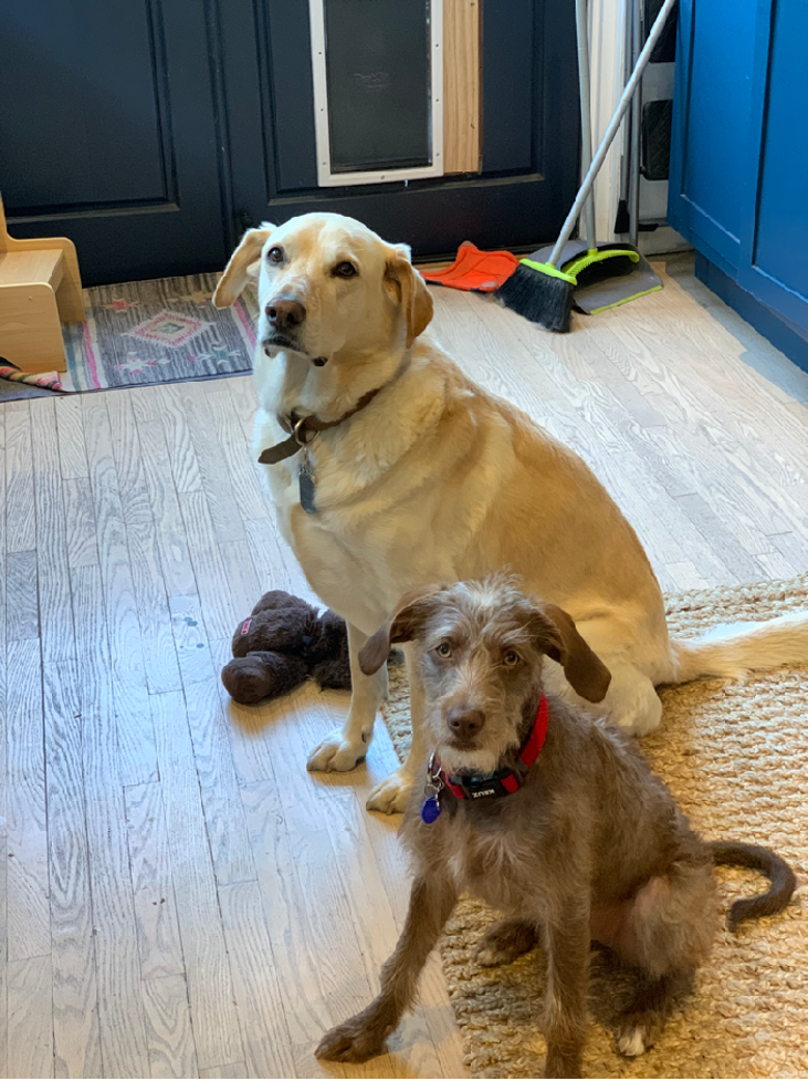 Laid-back Sadie (left) and loving Lula (right)