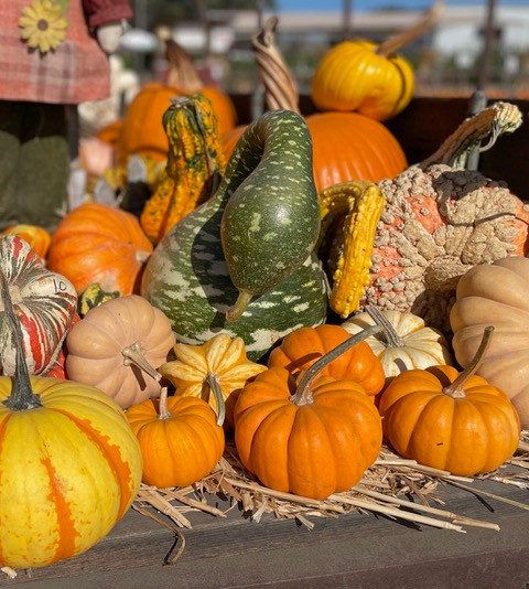The green gourd is great for drying and decorating
