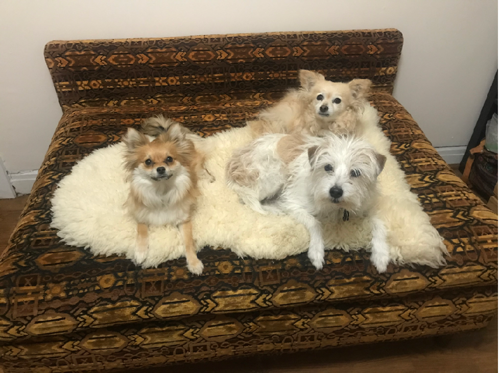 Juniper, Taco, and Ruby living it up in Los Angeles after being rescued