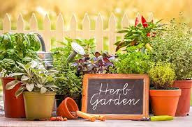 An herb garden pleases the eye and the palate