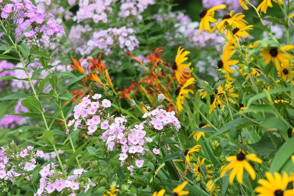 A glorious blaze of color in Victoria's summer garden