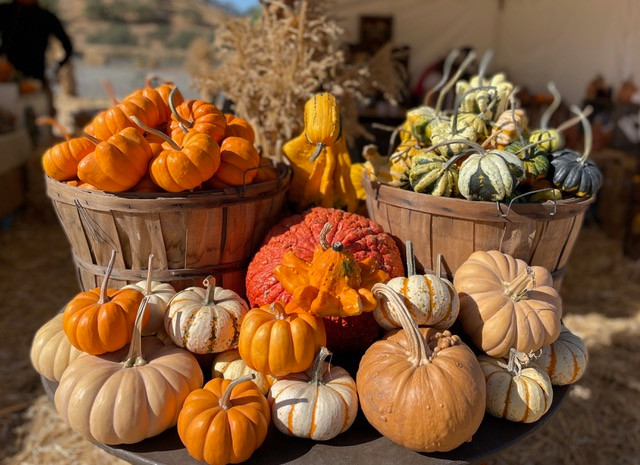 A variety of pumpkins and gourds