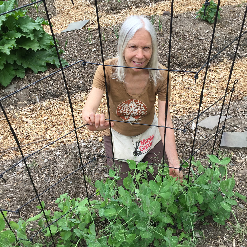 Victoria in the garden with sprouting snow peas