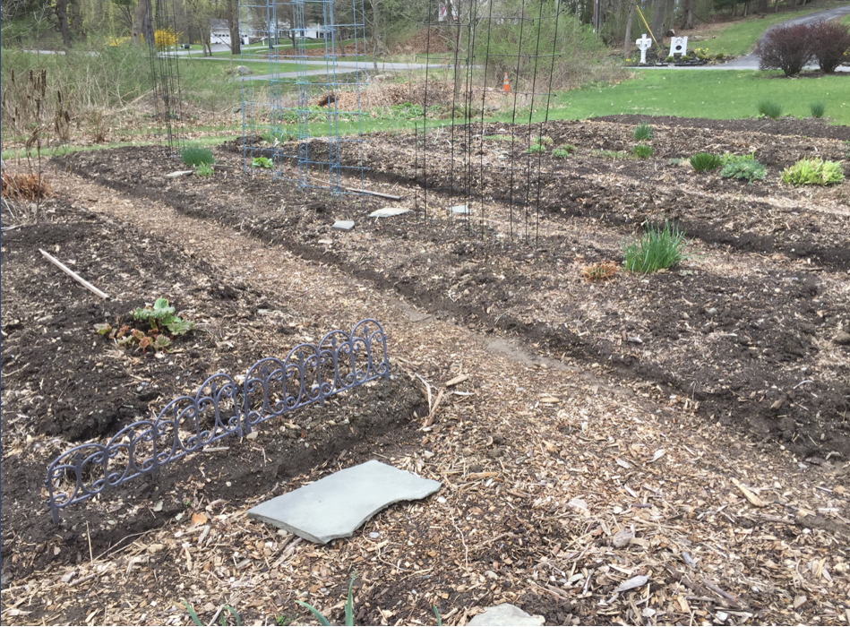 Victoria's lazy lasagna constructed raised bed gardens