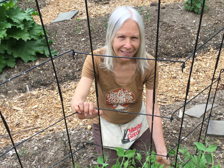 Weed It and Reap: Salad Days in the Garden