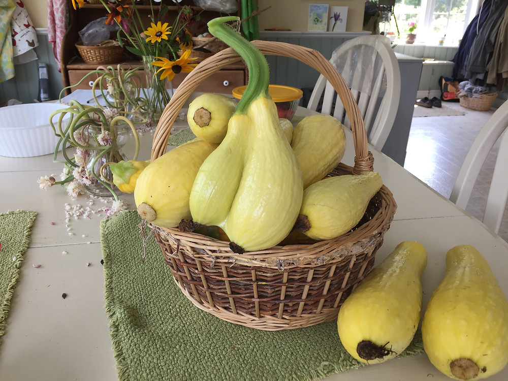 Our squash runneth over!