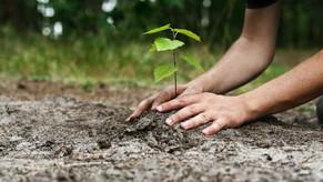 Jardins e vegetação nos telhados tornam as cidades mais sustentáveis?