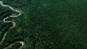 Piauí é o 2º a mais destruir Mata Atlântica, diz fundação