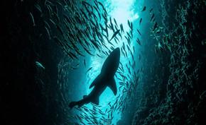 Alerta! Um milhão de espécies ameaçadas de extinção a um ritmo sem precedentes