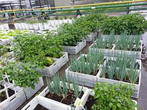 Hortas Escolares - ideias sustentáveis