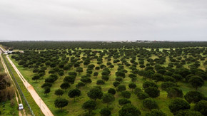 EM PORTUGAL: Fundo ambiental apoia 46 projetos de educação ambiental com 1,5 milhões de euros