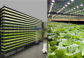 Fazenda vertical eólica produz mil toneladas de alimentos por ano