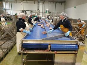 Parceria internacional promete expandir o comércio de pescado no Ceará