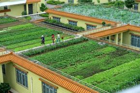 Proposta do Partido Socialista português: Vamos ter hortas no topo dos edifícios