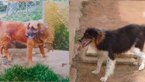 Conheça a história da MaxMello, ONG paulista que cuida de mais de 480 pets