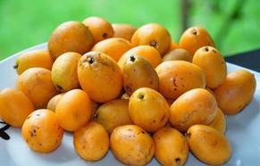 Rio Grande do Norte recebe R$1 milhão para investir em fruticultura