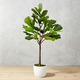 potted-65-fiddle-leaf-fig.jpeg