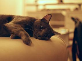 Punições possíveis para donos de animais: o que fazer para evitar conflitos com donos de animais de