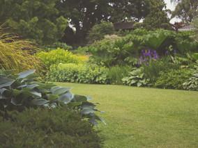 Dicas de manutenção de jardins.