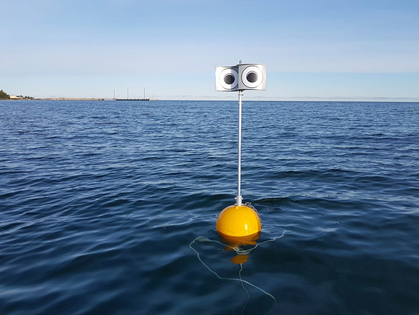 The Birds and the Buoys: Using Googly Eyes to Avert Extinction - New York Times