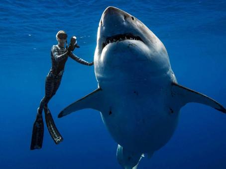 When Photographers Get Too Close, Wildlife Pays the Price - Hakai Magazine
