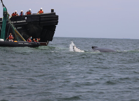 What It Took to Free a Whale Entangled in 4,000 Pounds of Fishing Gear - New York Times