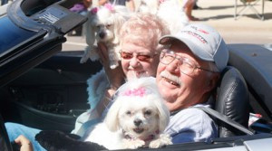 John and Carol Carlson, of Marshall, with two of their dogs in the Boxelder Bug Days Parade in September. They were representing Prairie Home Hospice.          Photo by Byron Higgin of the Minneota Mascot