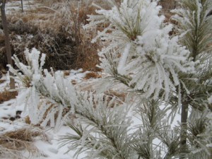 Winter-2012-019