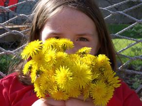 In Your Garden: Spring has sprung!