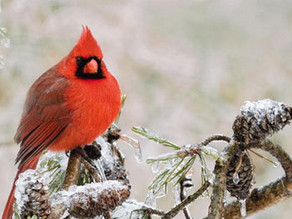 Bring the best birds to your backyard